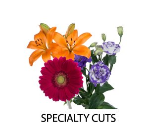 Specailty Cuts