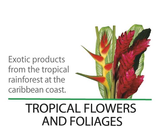 tropical-flowers-home