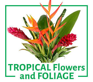 Tropical Flowes and Foliages